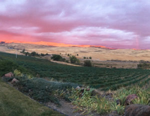 Sunset View at 3 Horse Ranch Vineyards