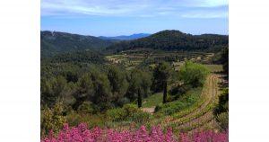 Vineyards of Ch+óteau Pibarnon