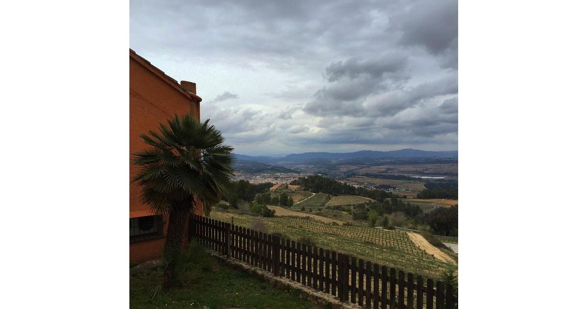 Vineyard of Cava Llopart in Penedes, Catalunya
