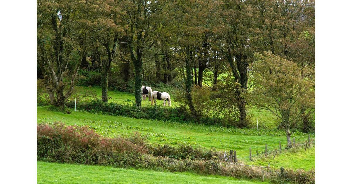 Horse Pasture near Dromberg Stone Circle - Ireland, by Kathleen Messmer