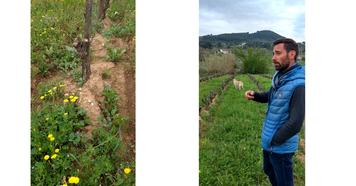 Biodynamic vineyards link wine to the land at Domaine Castell-Reyonard, Bandol and Julien Castell
