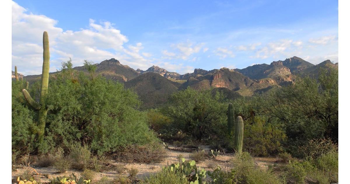 Tucson Locals Insider
