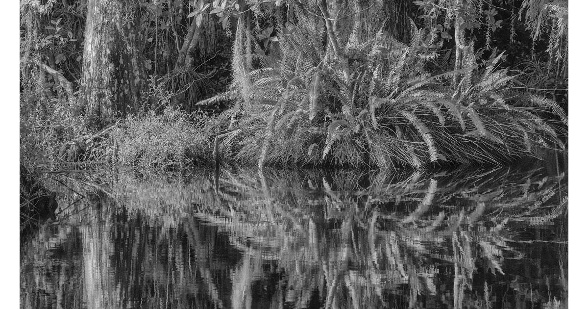 Carl Stoveland - Big Cypress