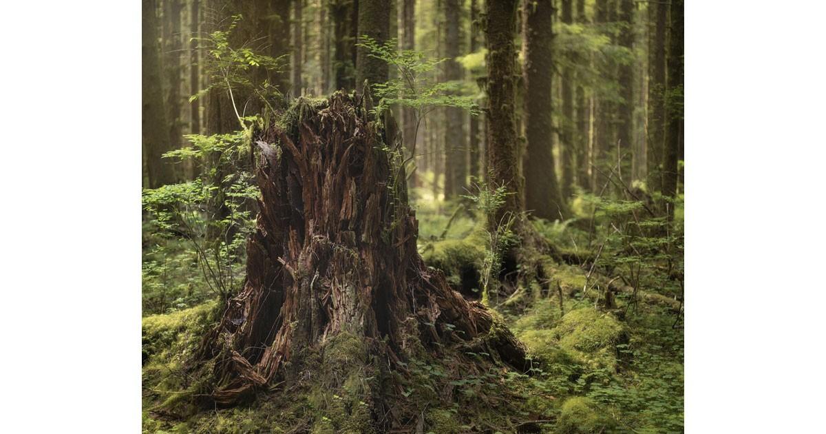 Carl Stoveland - Hoh Rainforest
