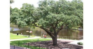 Family Fun in Natchitoches