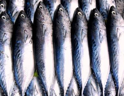 FishWineMain400_edited-1.jpg