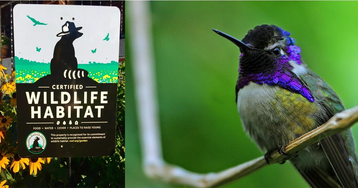 Gardening for Wildlife Sign.jpg