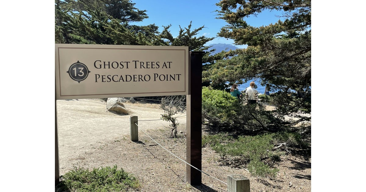 Ghost Trees at Pescadero Point