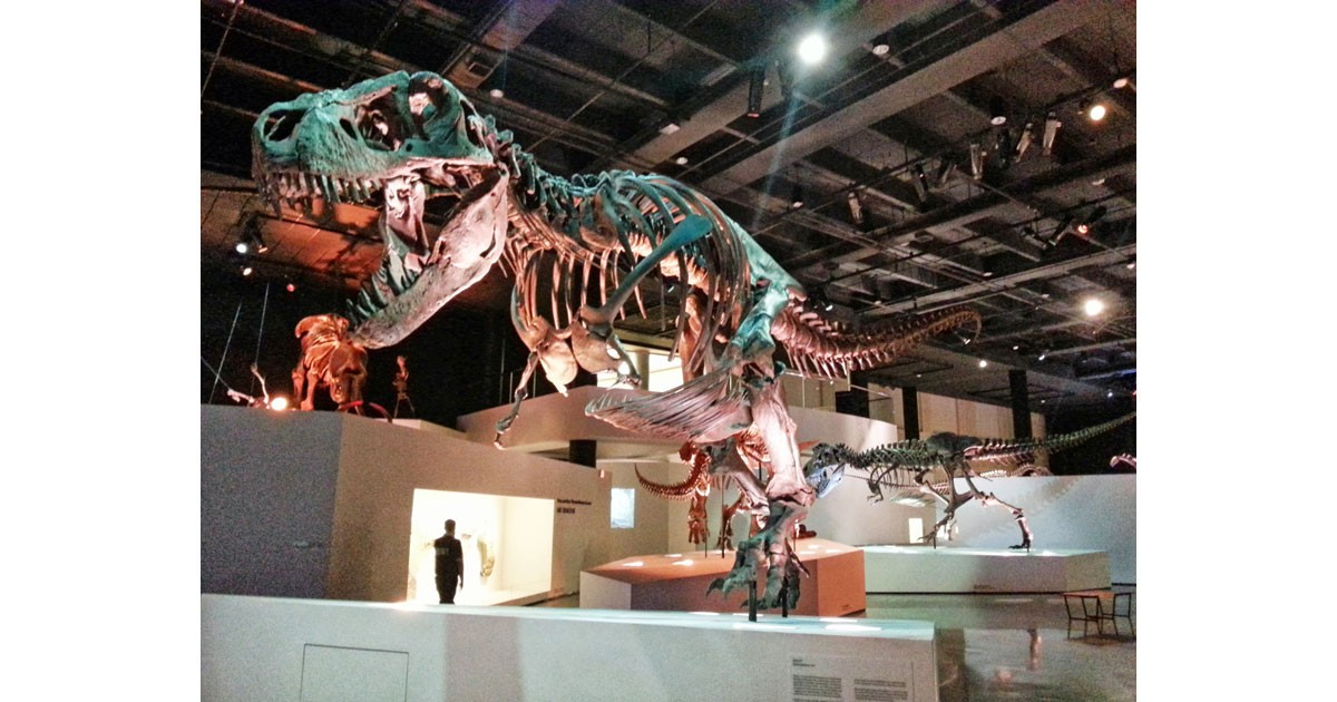 Museum of Natural Science - Houston