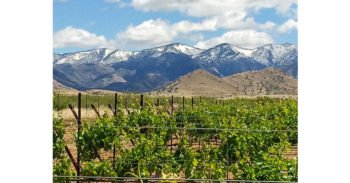 LDV Vineyard-Vineyards (C) LDV Vineyards and Winery