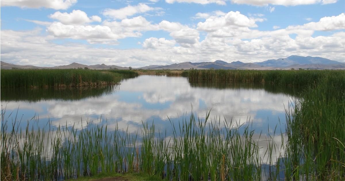 Mason Valley Wildlife Management Area, Nevada