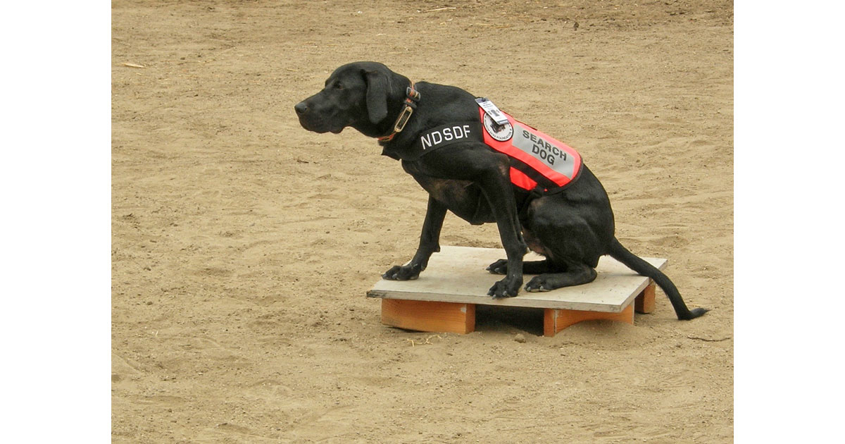 NDSDF Search Dog