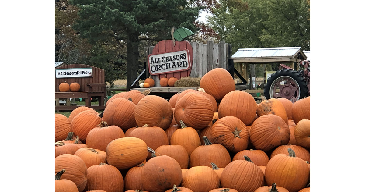 Pumpkins are a sign of fall