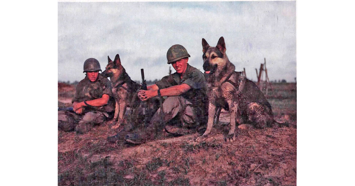 Scout dogs during Operation Fairfax, May 1967