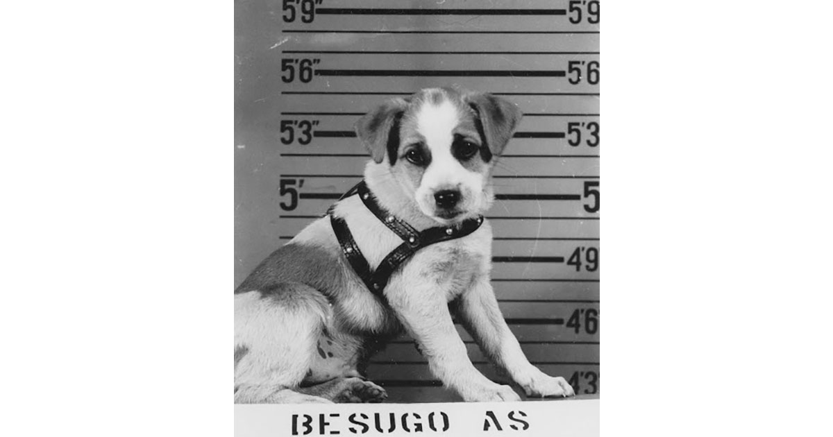 Sugie As Puppy-Military Mascot Besugo SS321 From Morris Bornstein's Files