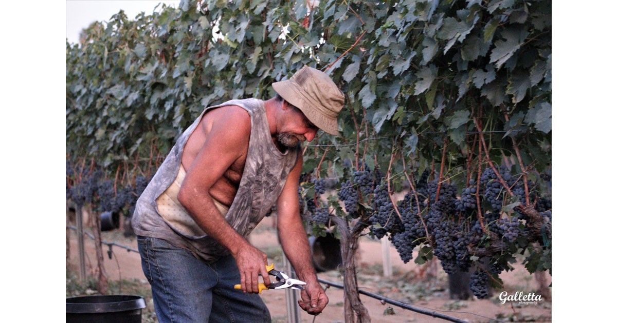Tranquil Heart Winery - Pruning