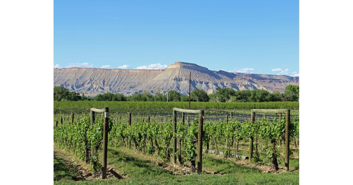 Taste Colorado Wine Country