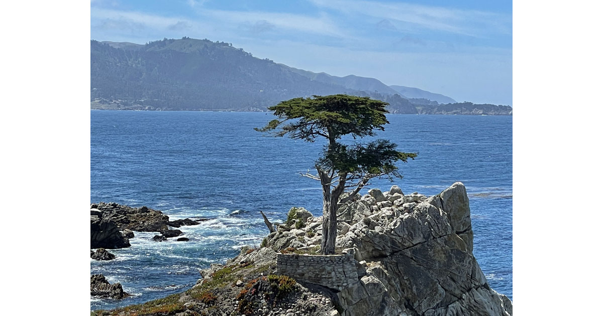 The Lone Cypress.
