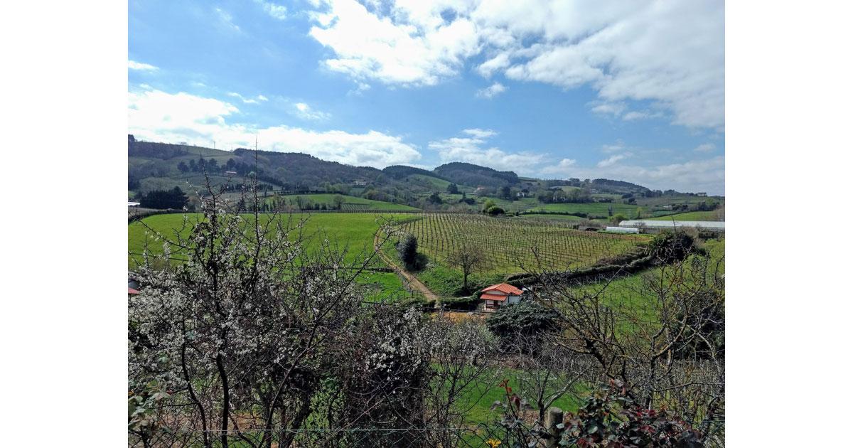 The rolling hills of Gerariako Txakolina