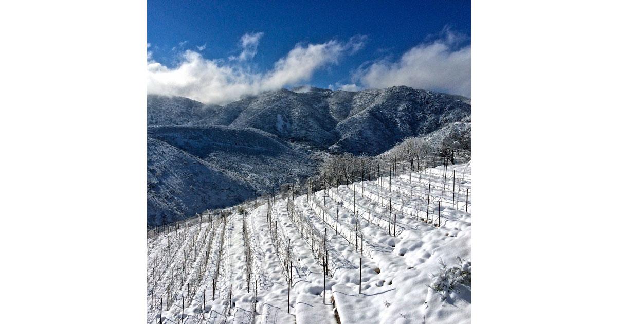Winter Vineyard Scene at Merkin_Caduceus Cellars (C) Merkin Caduceus
