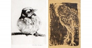 Young Blue Jay by Charles Heil & Lithograph by Dolly Perutz