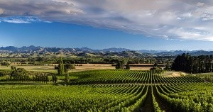 Mt Beautiful Vineyards
