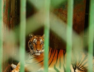Big Cat Public Safety Act