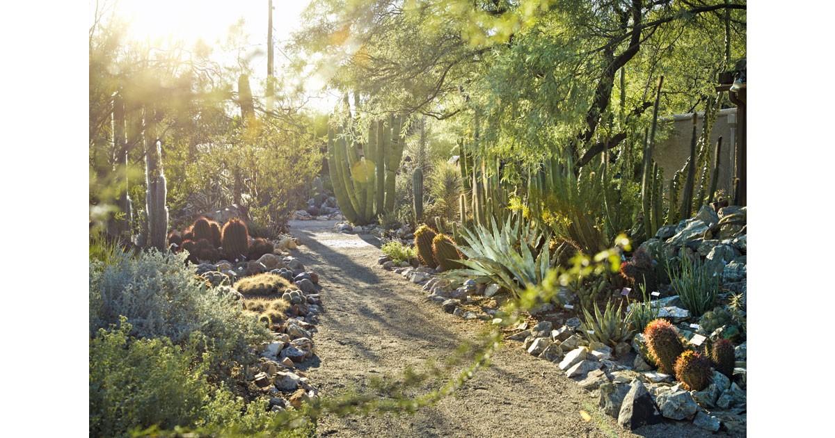 Tuscon Botanical Garden